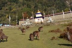 monastere-serang-mahasukha-europe 3
